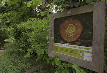 FSC-Siegel: zertifiziertes Holz im Wald